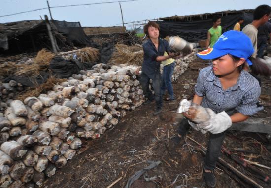 图文:志愿者在帮助什邡受灾农民抢救木耳菌袋