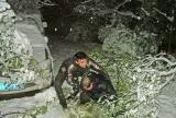 图文:雪树下救人