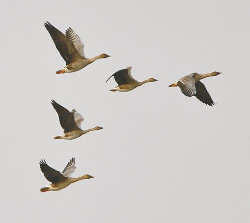有白鹤等国家一级保护鸟类6种