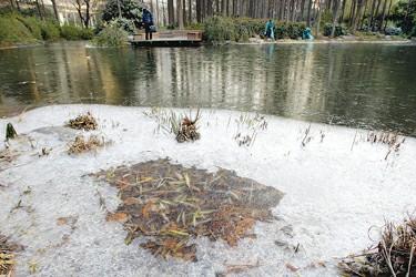 上海今冬首个霜冻橙色预警上午解除(组图)