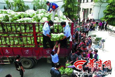 昨日下午,茶张村村民排着队领菜 本组图片由本报记者 于卓 摄