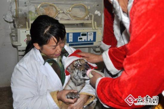 """云南野生动物园:""""美味""""圣诞节(图)"""