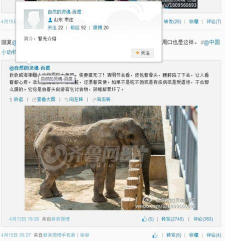 山东荣成1家动物园大象瘦骨嶙峋疑遭虐待(图)