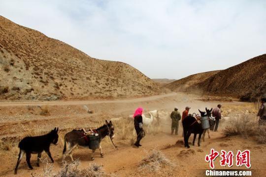 自去年入秋以来,甘肃肃南县气温偏高,降水稀少,目前已造其境内46条溪流干枯,476眼泉井干涸,逾七千人和42万余头(只)牲畜饮水困难,有5141头(只)牲畜因干旱死亡。 武雪峰 摄