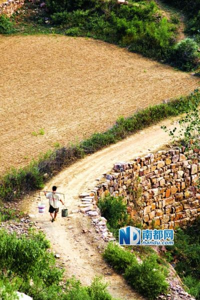 8月4日,河南宝丰空石洞乡,一村民挑着桶走了几里路去往上沟里打水,由于长期干旱,山路边的农田已撂荒。