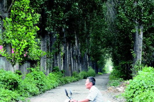 小平视察过的泡桐林场旧址。本报记者 张晓科 摄