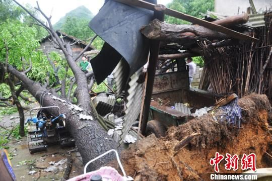 湖南江永村庄遭龙卷风袭击 大树被连根拔起
