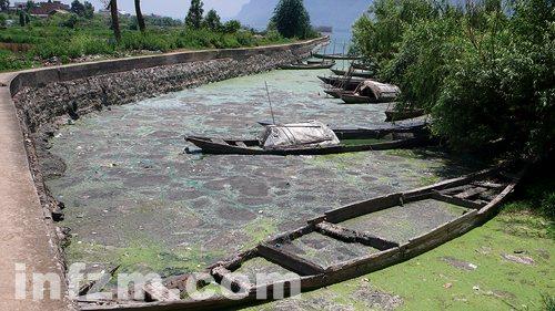 安徽云南蓝藻再次爆发凸显中国式治水困境