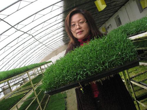 一个农村女企业家的2009:感谢经济危机
