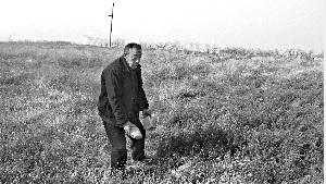 """南焦村村民李素岐在复垦的""""耕地""""里,捡起两个碗大的石头。这片土地上布满了石头,无法耕种。"""