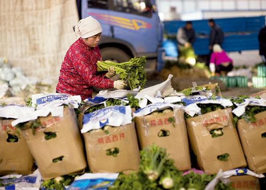 2010年3月26日,山东寿光农产品物流园。