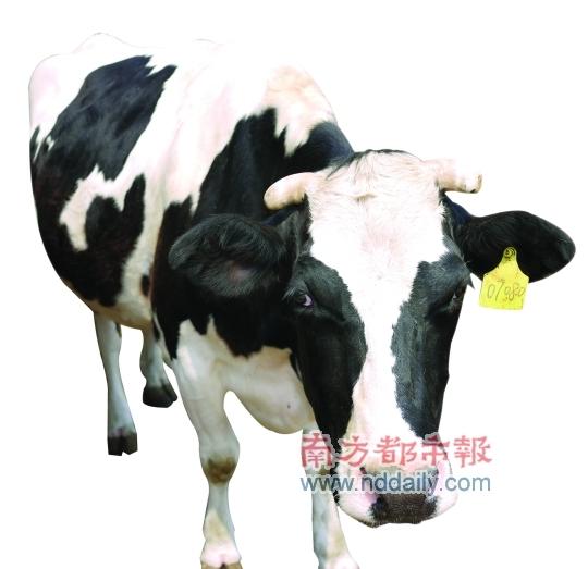 面牛怎么捏步骤图解