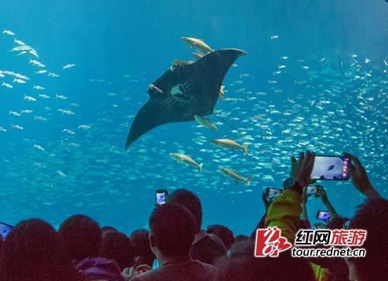 五一去长隆 全球最大海洋主题度假区来湘邀客(图)
