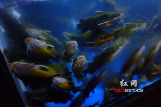壁纸 海底 海底世界 海洋馆 水族馆 550_365