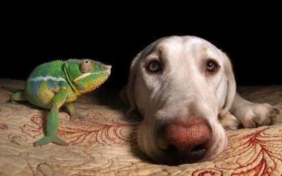 台媒:巴西近半数家庭饲养宠物狗 比儿童人数多