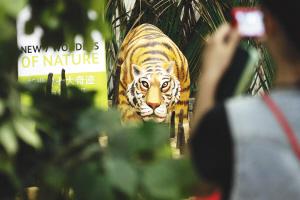 孟加拉馆迎来国家馆日 展示孟加拉虎等濒危物种