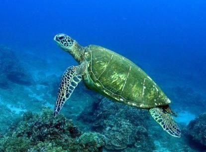 海洋塑料污染影响海洋动物生存.图片