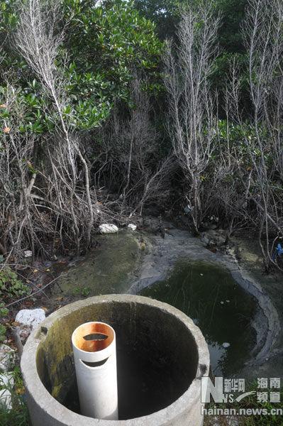 一块神奇的土地,囊括了从陆地到海洋数种热带生态系统;保护开发或破坏,不同的做法收获了完全不同的结果;追溯历史比照今天,引发探访者对可持续性环保的深思   新华网海南频道5月21日电(纪惊鸿)近日,在海南省第二次湿地资源调查队专家的带领下,记者踏访了陵水黎族自治县新村港南湾半岛黎安港一带。爬山涉水走滩涂,一路所见所闻带来许多震撼,这块土地拥有得天独厚的生态资源,也同时存在着保护开发和破坏的力量,从而真实地改变了环境和人类的生活。怎么样的环保才是可持续环保,什么样的道路才是可持续发展?通过实