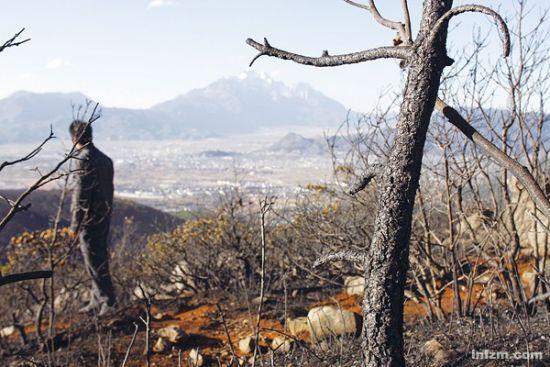 丽江大火扑灭后,山林清晰可见过火痕迹,玉龙雪山、丽江古城离此并不遥远。(南方周末记者 吕宗恕/图)