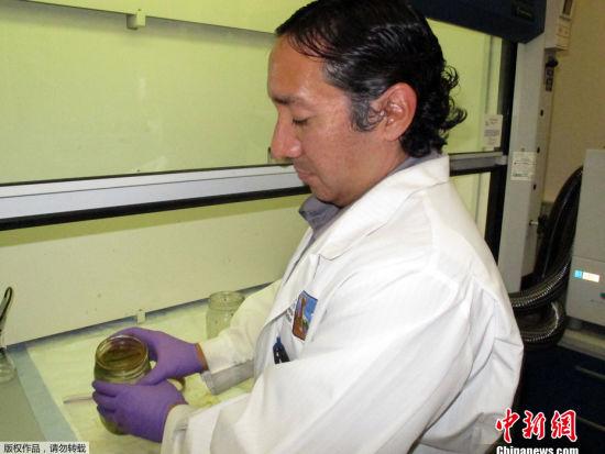 目前已初步排除橙色粉末与石油产物相关。