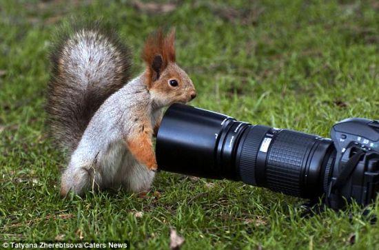 这只亮眼睛、长尾巴的松鼠对相机产生了兴趣。