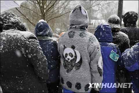 """1月30日,在美国首都华盛顿国家动物园,人们冒雪与大熊猫""""泰山""""告别."""