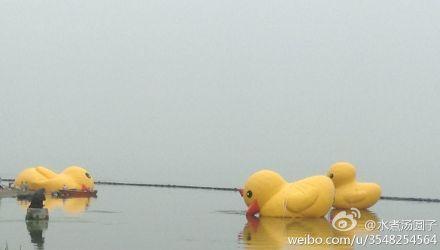 """网友@水煮汤圆子去看大黄鸭一家三口时暴雨倾盆,被淋了一身雨,表示""""这是用生命看大黄鸭""""。鸭子也因暴雨而被迫转移。"""