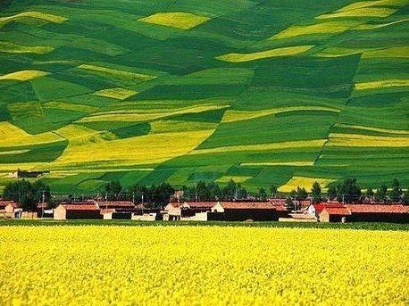 百度成人bt图片_西藏林芝的油菜花(图片来源:百度图片)