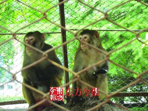 小母猴子图片大全可爱