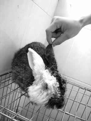 可爱小兔子侧身简笔画