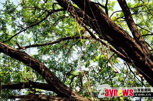 大树刮风简笔画