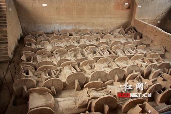 (战马的遗骸保存也很完整。)   红网山西临汾6月13日讯(特派记者 董雷)古代皇帝希望在去世之后,仍能在阴间指挥千军万马,所以才有了秦始皇陵兵马俑的诞生。而秦始皇陵兵马俑仅仅是众多出土的地下战队之一而已。近年山西临汾市曲沃县附近的晋侯墓地出土的陪葬古车马坑,年代比始皇陵兵马俑还要早600多年,是目前中国发现的商周时期埋葬车辆最多的车马坑。   曲村共计约11平方公里的土地上,有20000余平方米的晋侯墓地,10000余座西周至战国古墓。目前已发掘出周代墓600多座,出土了280余件青铜礼器,大量青
