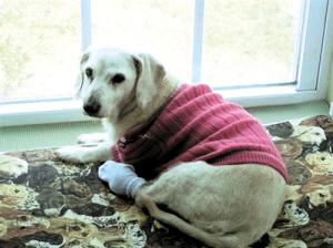 吉尼斯纪录认定的最长寿狗死亡