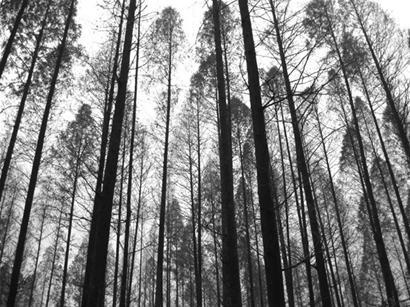 树林 水墨画