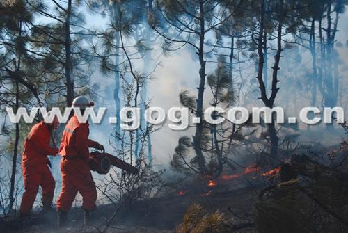 威宁发生森林火灾