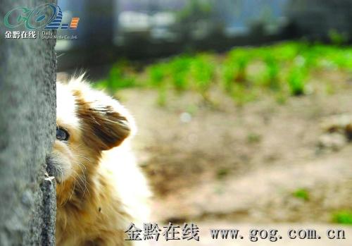 动物救助站宣布取消,这个消息立刻引爆关于流浪狗的