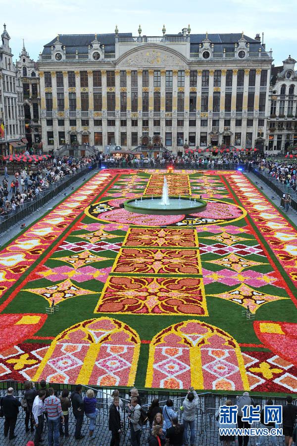 布鲁塞尔鲜花地毯惊艳亮相使用60万株秋海棠占地2000平(高清组图)