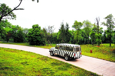 一台漆成斑马条纹的游览车正从长沙生态动物园车道