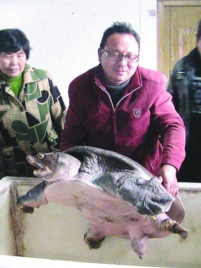 野生甲鱼重达84斤会跳起咬人(图)
