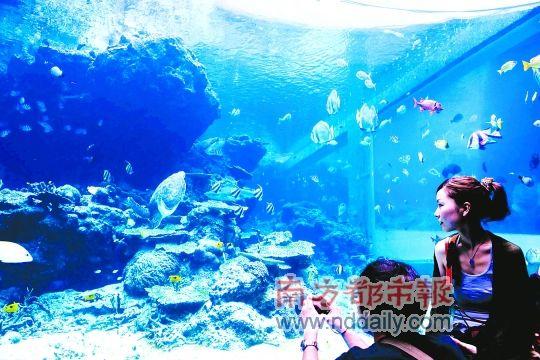 壁纸 海底 海底世界 海洋馆 水族馆 桌面 540_360