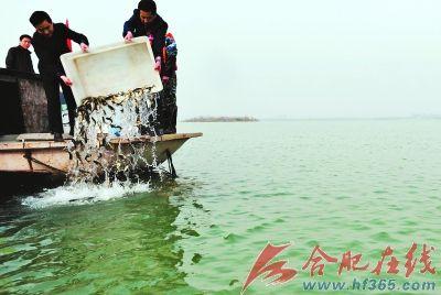 珍稀胭脂鱼将重回巢湖
