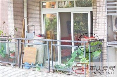 女邻居阳台上养蜜蜂 郭先生家差点变蜂窝