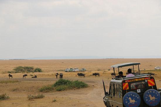 非洲沙漠野生动物摄影