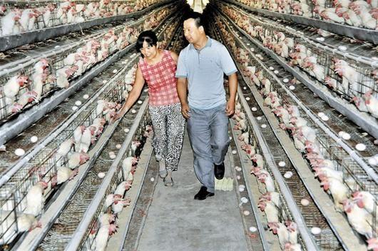 楚天都市报讯 图为:程建国的养鸡场如今能养10万只鸡   本报记者张皓 特约记者揭兴旺 实习生邹清媚   新洲区凤凰镇三叉路村,武汉市一个偏远的远郊小村。   该村共有617家农户,2110名村民。2005年,该村在经济上还属于后进村,当年全村农民人均纯收入3326元,离农村全面小康社会标准人均可支配收入6000元相距甚远。   就在去年,该村人均纯收入提高到9500元,增速远远高于该市同期平均水平;村级集体收入从无到有再到快速增长,全村形成以发展蛋鸡养殖、林果庭院开发以及高效特色种养殖为主导的产业