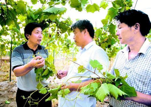图文:传授种植技术