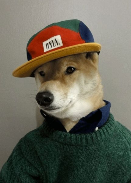 动物品牌的衣服叫什么