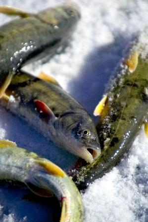 青海湖美食:无鳞湟鱼肥嫩鲜美 人参果奇妙延年