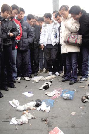 中国小动物保护协会会长芦荻前往丰台城管大队了解
