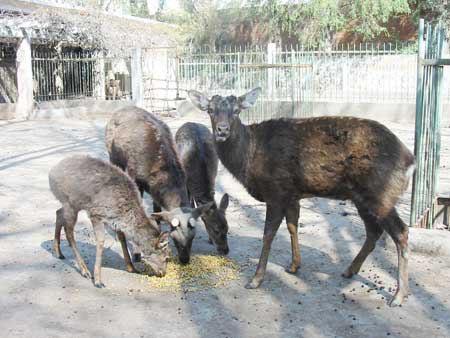 公园动物屡遭猎杀或其他非自然死亡 剩两种动物