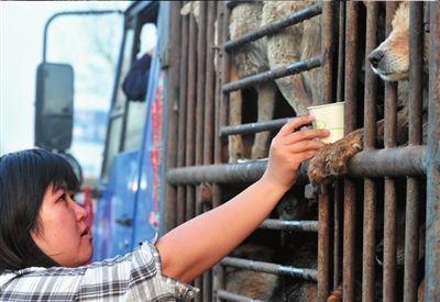 志愿者在给狗喂水。图片来源:京华时报